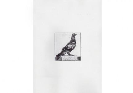 Freevolo, Filippo Leonardi per B Publishing