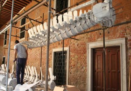 Galleria dei Cetacei